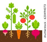 vegetable garden  simple flat... | Shutterstock .eps vector #620494073
