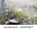 Fungus Is A Parasite On The...