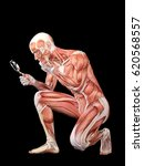 male muscle anatomy searching... | Shutterstock . vector #620568557