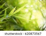 green nature with copy space... | Shutterstock . vector #620873567