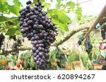 grape   Shutterstock . vector #620894267