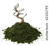 Bonsai Tree Planted On A Moss...