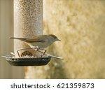 female small bird warbler...   Shutterstock . vector #621359873