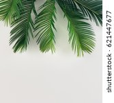 tropical palm leaves on bright... | Shutterstock . vector #621447677