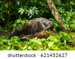 giant anteater | Shutterstock . vector #621452627
