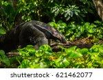 giant anteater | Shutterstock . vector #621462077