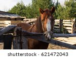 horse and rooster in the... | Shutterstock . vector #621472043
