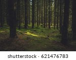 Small photo of Rays of sun through the thick forest.