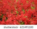 red flower | Shutterstock . vector #621491183