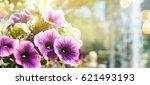 Garden Flower  Summer Background