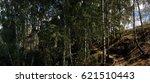 in a birch grove | Shutterstock . vector #621510443