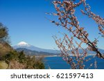 fuji and cherry blossoms seen... | Shutterstock . vector #621597413