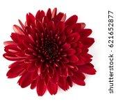 red chrysanthemum flower... | Shutterstock . vector #621652877