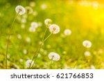 beautiful nature dandelion... | Shutterstock . vector #621766853