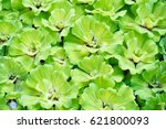 mosquito fern and common...   Shutterstock . vector #621800093