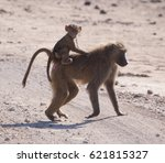monkey family | Shutterstock . vector #621815327