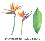 Set Of Ropical Flower...