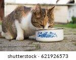 Cat Drinking Water