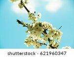 spring blossom in nature.... | Shutterstock . vector #621960347