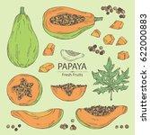 collection of papaya and papaya ...   Shutterstock .eps vector #622000883