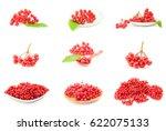 set of viburnum berries... | Shutterstock . vector #622075133