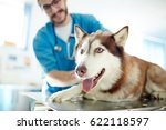 Stock photo cute pet lying on table in vet clinic 622118597