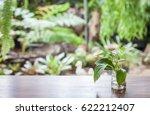 fern green on wooden table | Shutterstock . vector #622212407