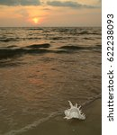 Small photo of Tropical sunset beach with a natural Murex Ramosus shell, Gulf of Thailand