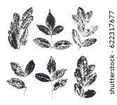 original nature print. unique... | Shutterstock . vector #622317677