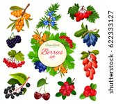 Berries And Wildberry Vector...