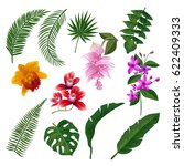 Stock vector set of tropical flowers bouquet vector illustration of leaves and branches color flower and green 622409333