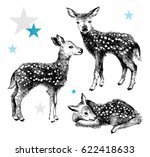 3 hand drawn baby deers in... | Shutterstock .eps vector #622418633