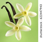 two white vanilla flowers with... | Shutterstock . vector #622447943