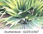green leaves    Shutterstock . vector #622511567