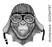 gorilla  monkey  apehand drawn... | Shutterstock . vector #622564787