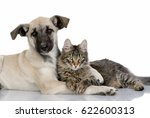 Stock photo animals friendship dog with cat 622600313