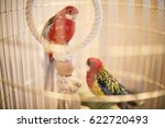 Rosy Faced Lovebird In A Cage...
