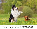 picture of a border collie... | Shutterstock . vector #622776887