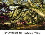 live oak trees  lit by the... | Shutterstock . vector #622787483