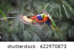 Rainbow lorikeet in flight ...
