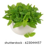 Potted Mint Plant On White