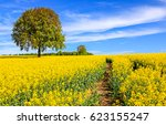 Yellow Flowers Field Path...