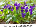 Violet Violets Flowers Bloom I...