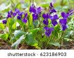 Violet Violets Flowers Bloom I...