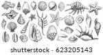 Seashells Vector Set. Hand...