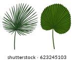 palm leaf illustration  drawing ... | Shutterstock .eps vector #623245103
