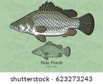Nile Perch  African Snook....