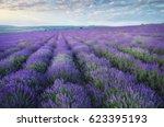 lavender beautiful meadow.... | Shutterstock . vector #623395193