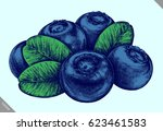 engrave isolated blueberry hand ... | Shutterstock .eps vector #623461583