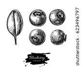 blueberry vector drawing set.... | Shutterstock .eps vector #623496797